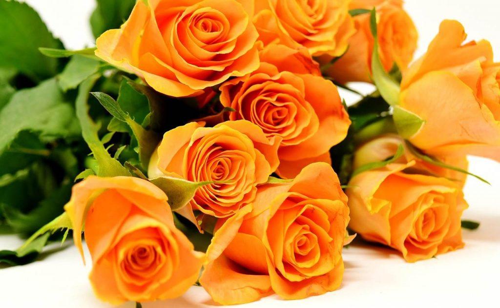 Sázkou na jistotu jsou růže z několika důvodů